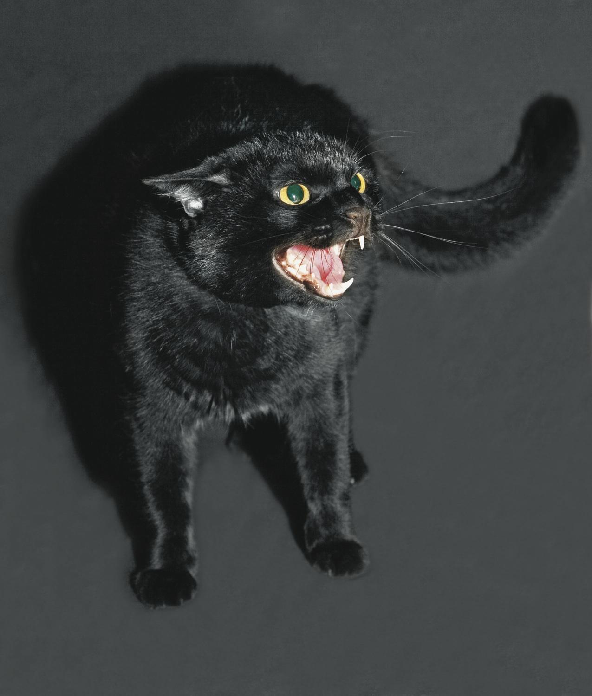 cat-acts-strangely
