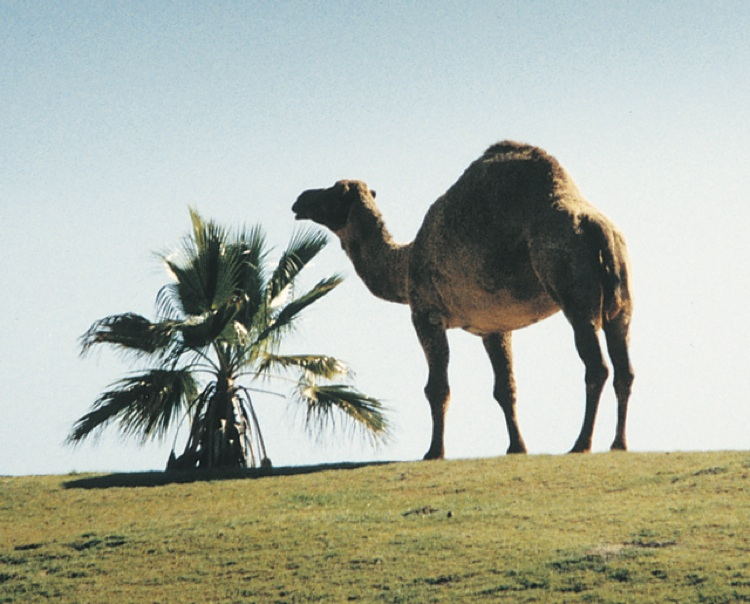 CamelColor copy