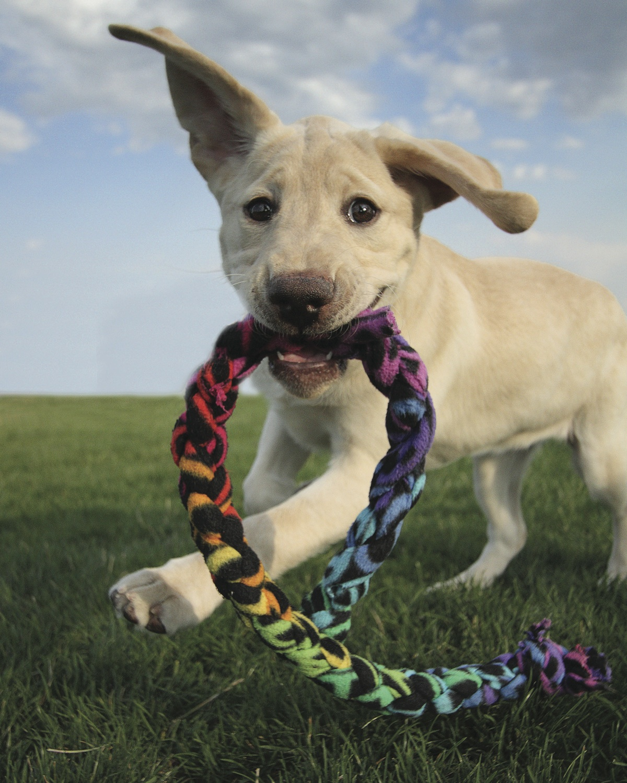 PuppyBraidedToyHC1404